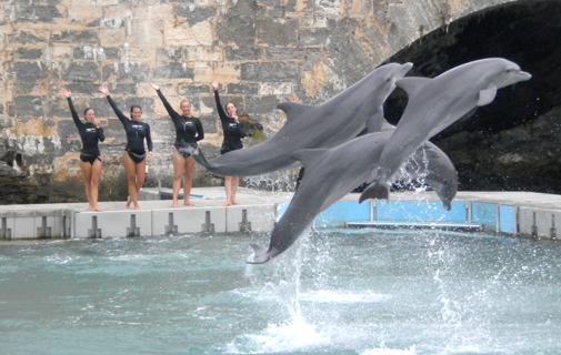 Dolphin Quest remains a major attraction in Dockyard. *File photo