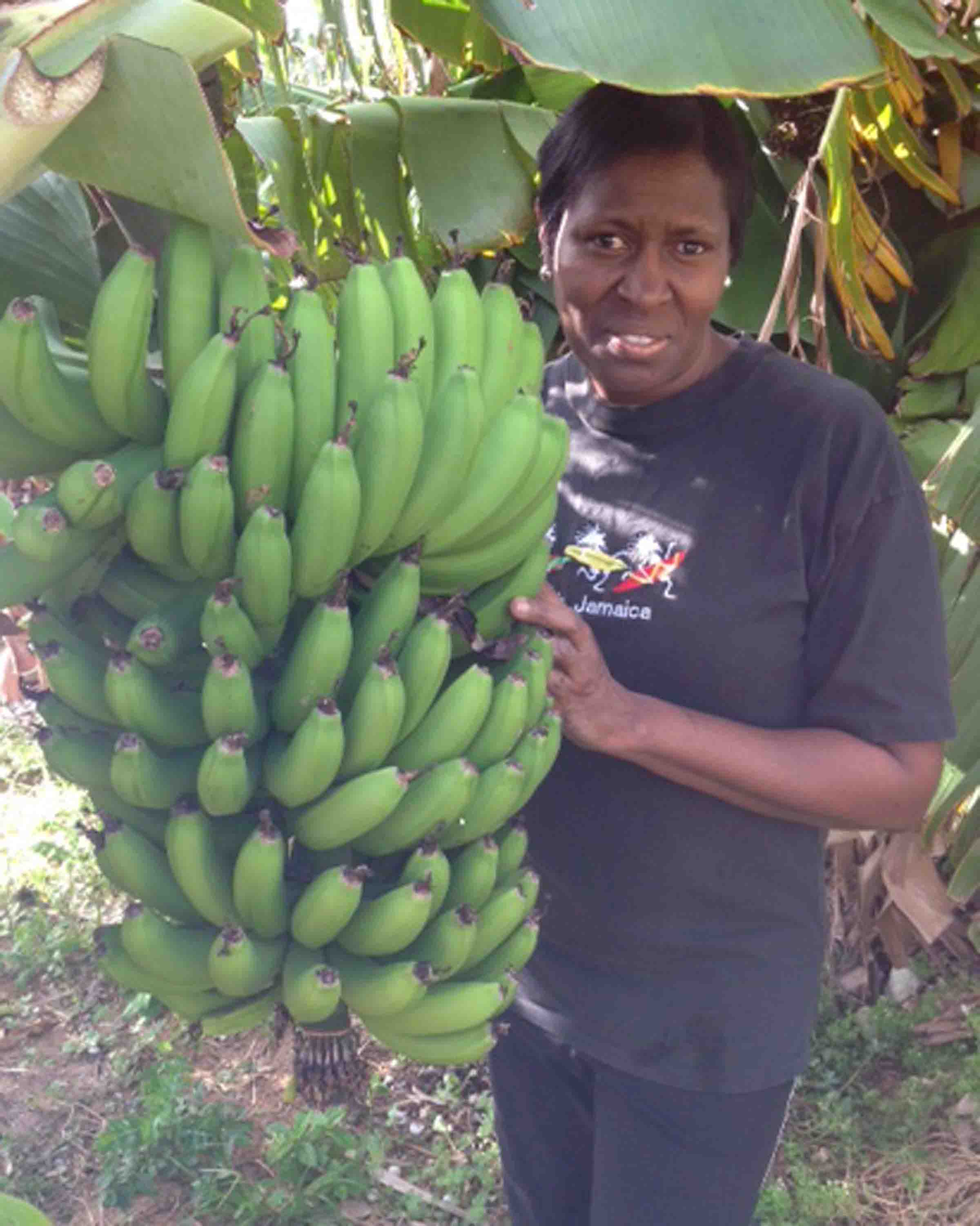 Loving care: Along with flowers, Ann Marie DeGraff also grows bananas on her farm at her home in Somerset.