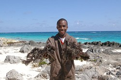 Environmental issues: Bermuda College student Nesta Wellman holds up Sargasso seaweed on South Shore. The seaweed is the subject of a video he is working on with fellow students to submit to the National Trust and Greenrock's Earth Day Video Competition. *Photo supplied